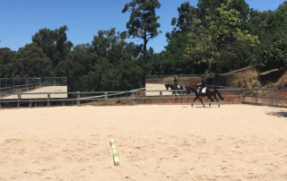 Sam training Jaybee Calypso with new mirrors on the arena